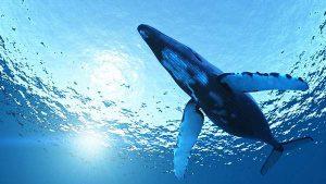 wallpaper-whale-photo-08